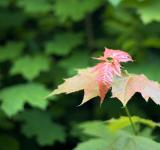 Free Photo - leaves