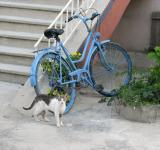 Free Photo - Cat and bicycle