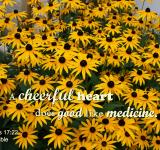 Free Photo - Merry Heart Like Medicine