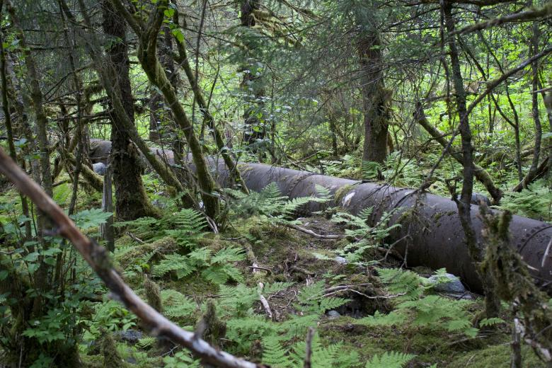 Free Stock Photo of Pipeline through forest Created by Chris Adzima