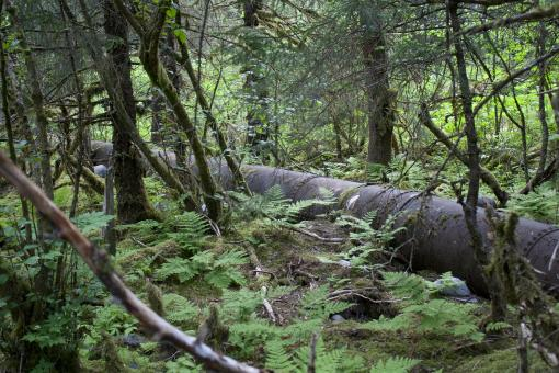 Pipeline through forest - Free Stock Photo