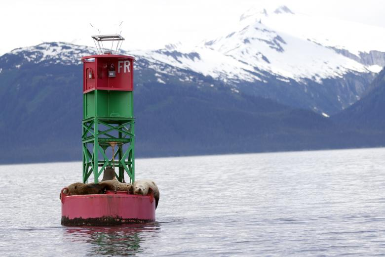Free Stock Photo of Sea Lions on Buoy Created by Chris Adzima