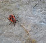 Free Photo - Red Bug