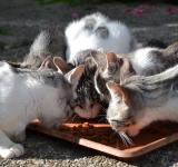 Free Photo - Cats eating