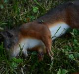 Free Photo - Dead Squirrel