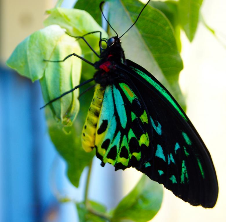 Free Stock Photo of Butterfly Created by Brian Norcross