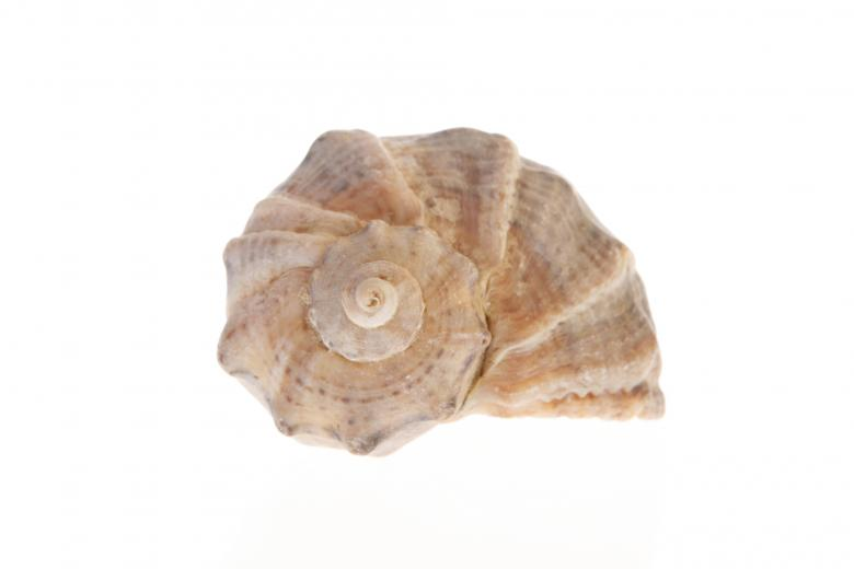 Free Stock Photo of Seashell  Created by 2happy