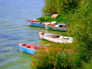 Three Boats in Reeds Free Photo