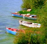 Free Photo - Three Boats in Reeds