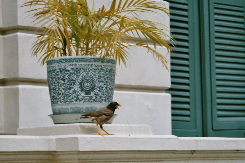Free Stock Photo of Bird in bangkok Created by SIVI