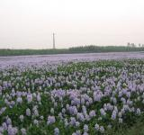 Free Photo - Field of flowers