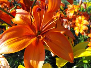 Download Orange Flower Free Photo