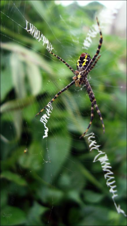 Free Stock Photo of Spider Created by RIC ALTEA