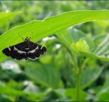 Free Photo - Dark butterfly