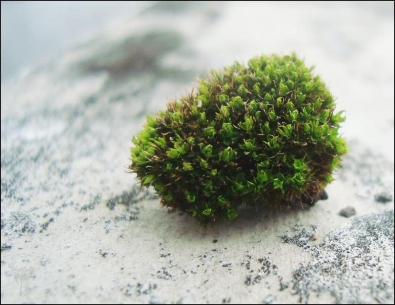 Free Stock Photo of Moss on rock Created by RIC ALTEA