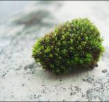 Free Photo - Moss on rock