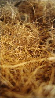 Download Yellow dry grass Free Photo