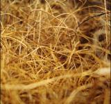 Free Photo - Yellow dry grass