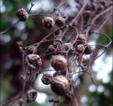 Free Photo - Seed Pods