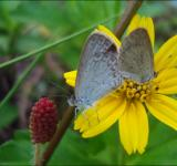 Free Photo - Butterfly on yellow flower