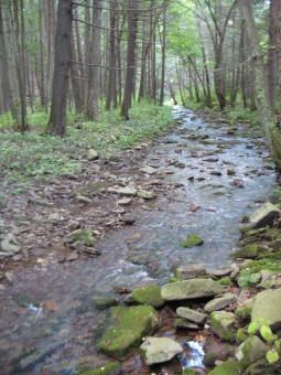 Mountain stream - Free Stock Photo