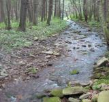 Free Photo - Mountain stream