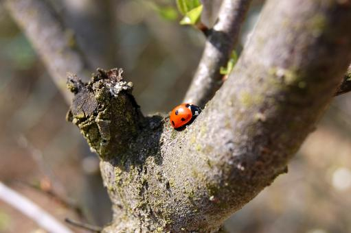 Where are u going Lady Bug? - Free Stock Photo