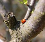 Free Photo - Where are u going Lady Bug?