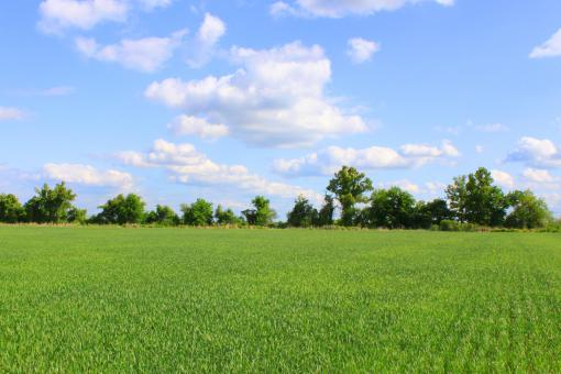 Beutiful field - Free Stock Photo
