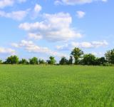 Free Photo - Beutiful field