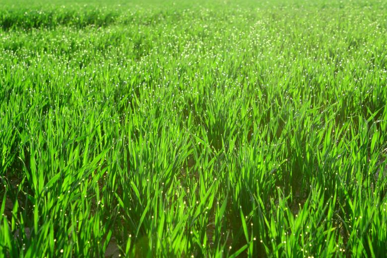 Free Stock Photo of Beautiful green grass Created by Val Lawless