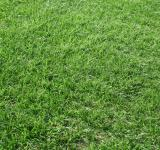 Free Photo - Beautiful green grass