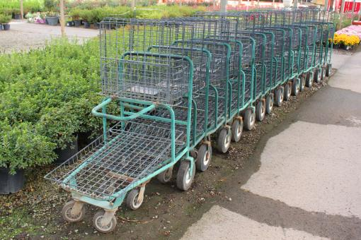 Shopping carts in a garden center - Free Stock Photo
