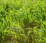 Free Photo - Grass background