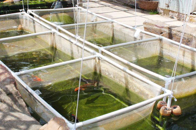 Free Stock Photo of Fish Nursery in Thailand Created by Val Lawless