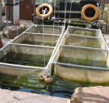 Free Photo - Fish nursery