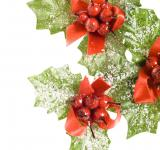 Free Photo - european holly