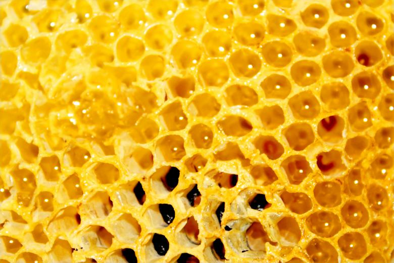 Free Stock Photo of Honey comb Created by Val Lawless
