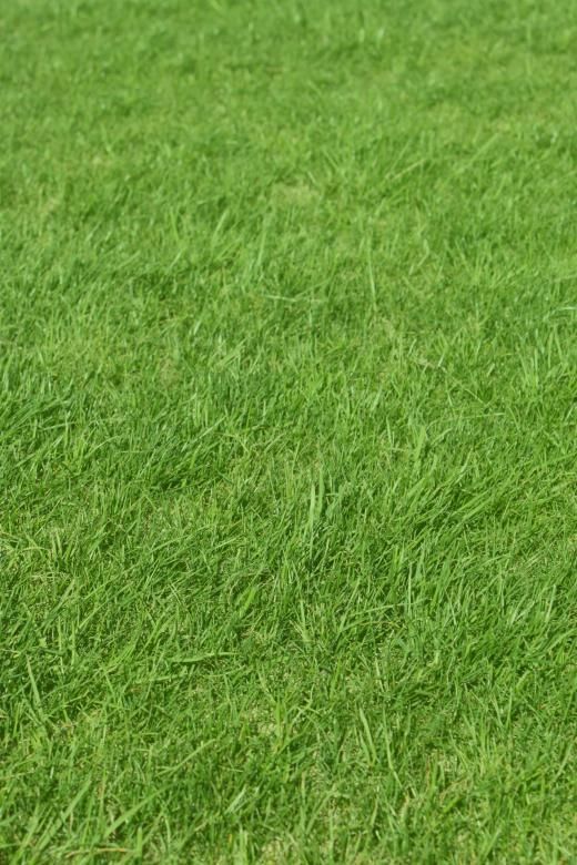 Free Stock Photo of Green Grass Background Created by Val Lawless