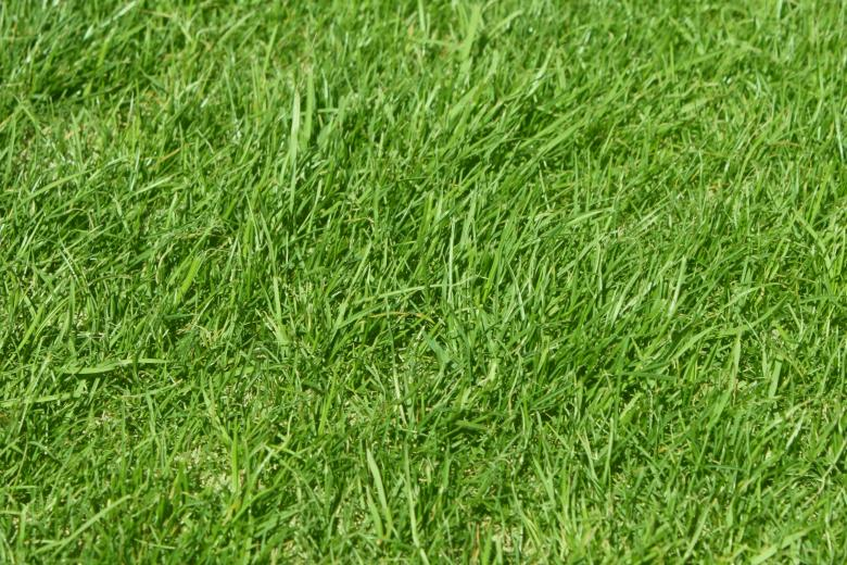 Free Stock Photo of Grass Created by Val Lawless