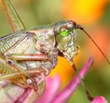 Free Photo - Grasshopper on a flower
