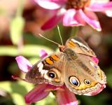 Free Photo - Flower with butterfly