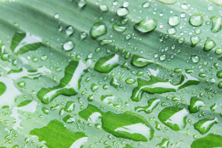 Free Stock Photo of Water on a leaf Created by Val Lawless