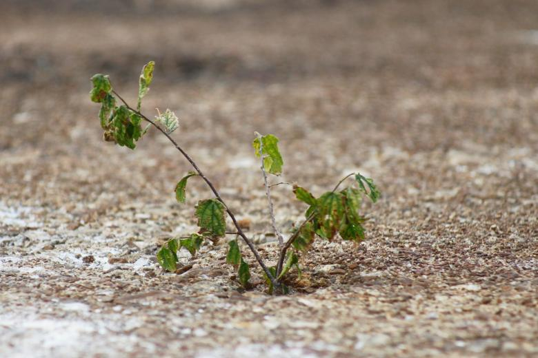 Free Stock Photo of Small plant Created by Val Lawless