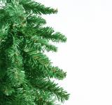 Free Photo - Green Christmas tree border