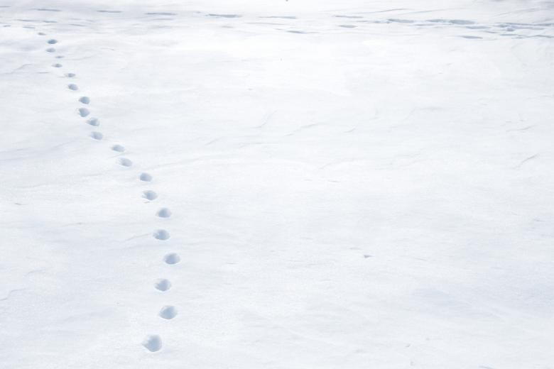 Free Stock Photo of Snow with tracks Created by Val Lawless