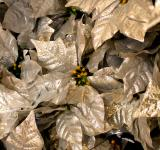 Free Photo - Silver poinsettia