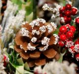 Free Photo - Pine cones arragement