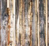 Free Photo - Old Wood Background
