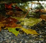 Free Photo - Leaves in water